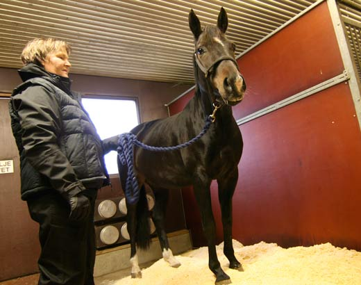 A woman and a horse in a stall.