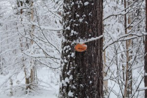 Ett trä i snöig skog.